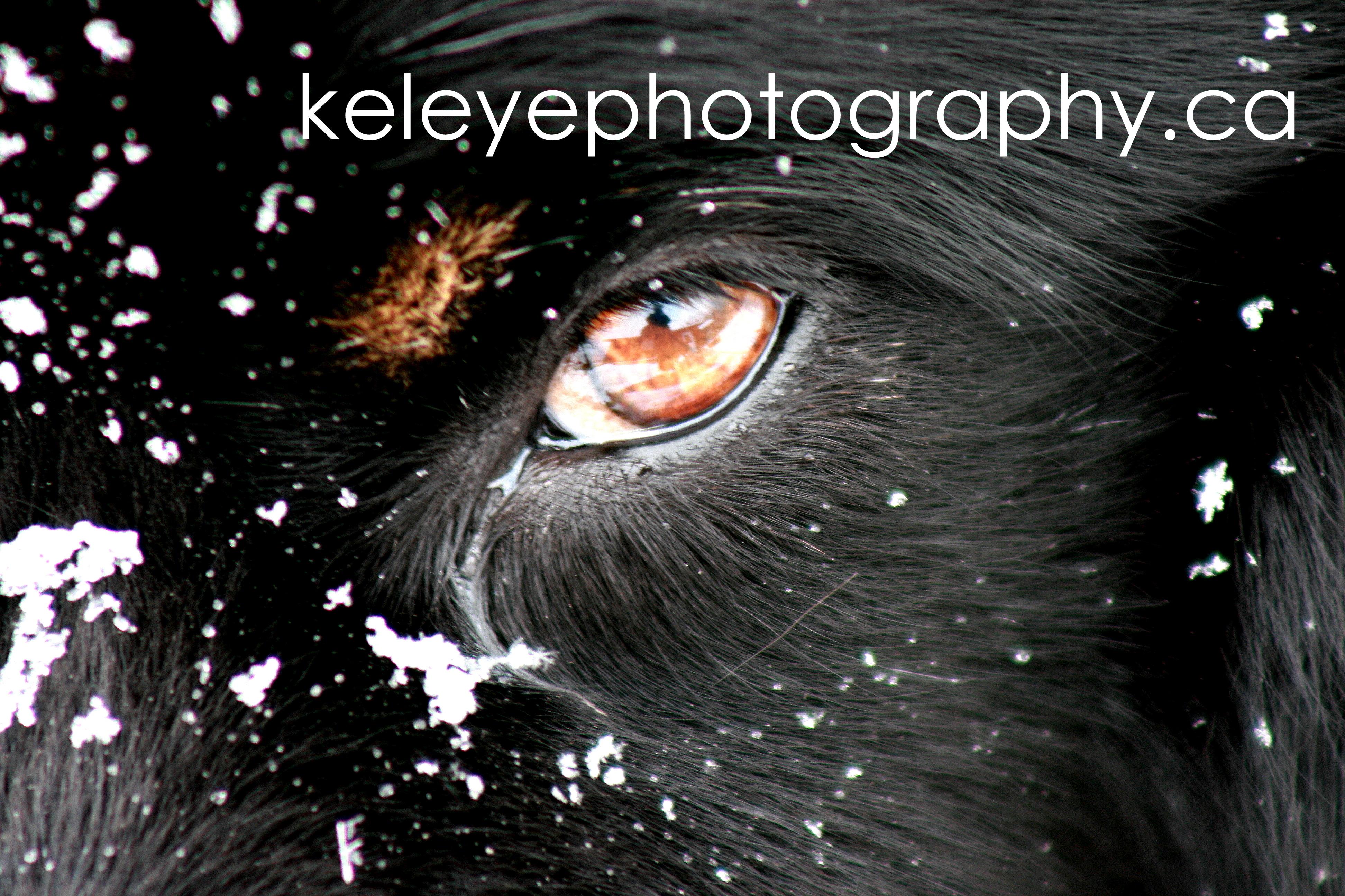 Kel Eye Photography